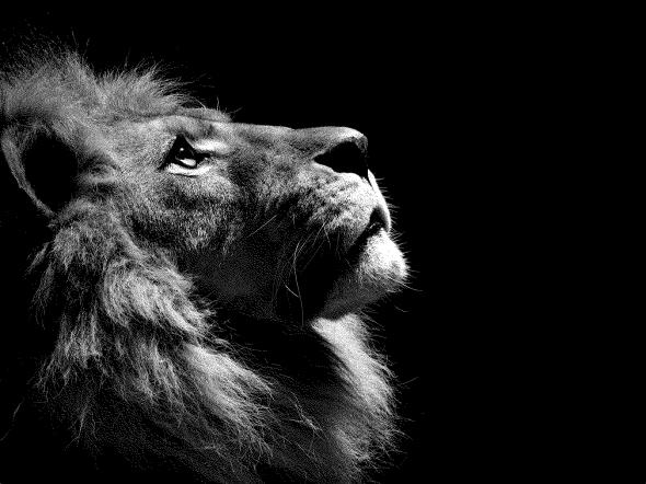 lion1-1123